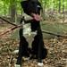 Charlie, Sourlands Trails