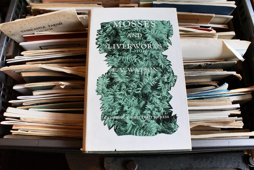 > Mousses et fougères sur une couverture de la librairie Gently Mad d'Edimbourg.