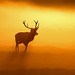 Stag at Sunrise by Snapdragon1959