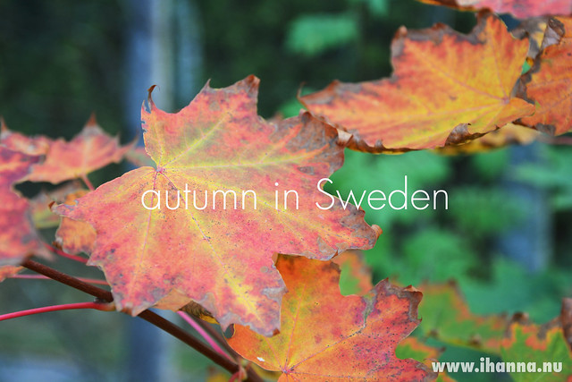 Autumn in Sweden by iHanna, photo copyright by Hanna Andersson