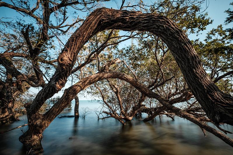 The tree view of Lake Biwa