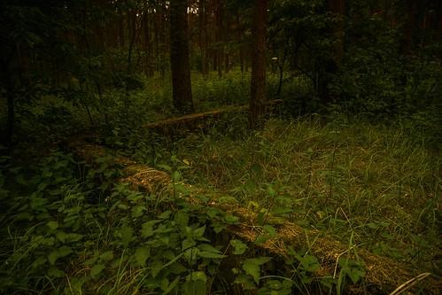 ...mitten im Wald (Altmark)