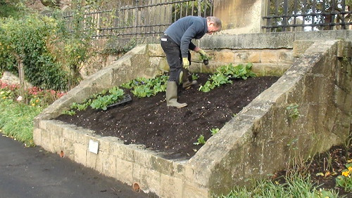 Planting Up Whickham Oct 17 (7)
