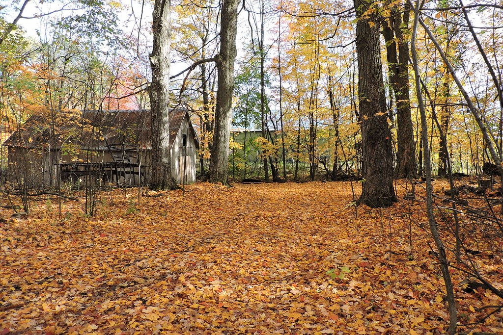 Arboretum Gabrielis