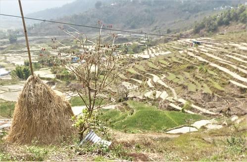 n-pokhara-Pagode-Paix-descente (17)