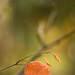 Lone Leaf by asphotography46