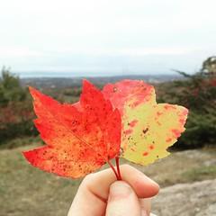 #autumn #foliage #fall #fallfoliage #vermont #fivetreehill