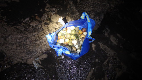 Golf balls removed from Berlayar Creek