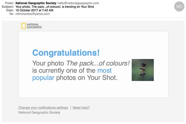 Your photo The packof colours is trending on Your Shot