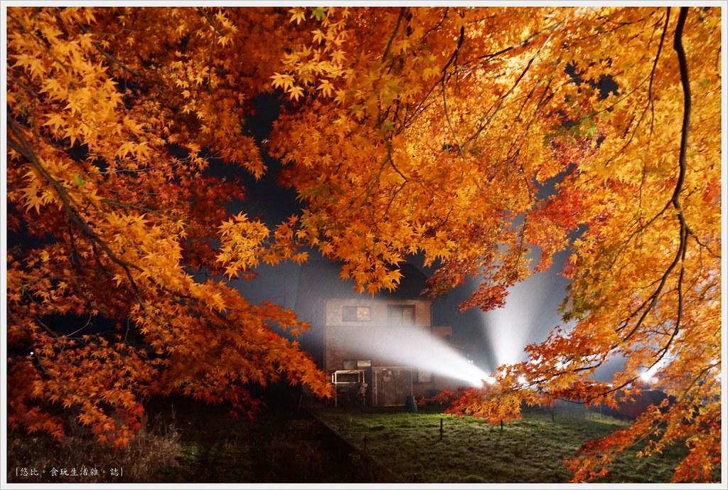 紅葉迴廊-紅葉祭-夜楓-26