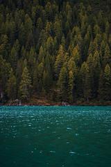 Texture del lago