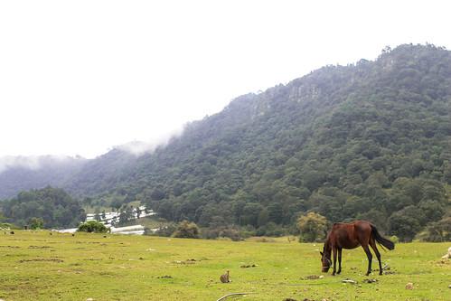 Zinacantán, Chis. (12)