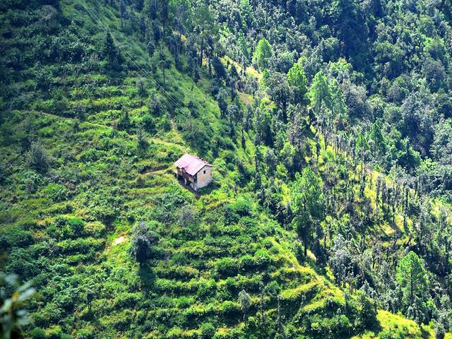 उत्तराखण्ड में 13000 वन पंचायतें सक्रीय हैं