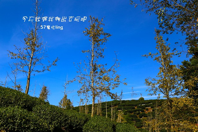 IMG_4468-26