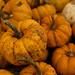 pumpkin-5151.jpg