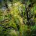 Autumn Storm by Brigitte Graf