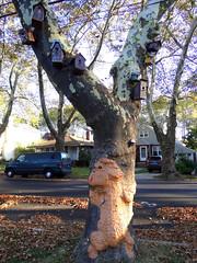 A tree-huggin' canine