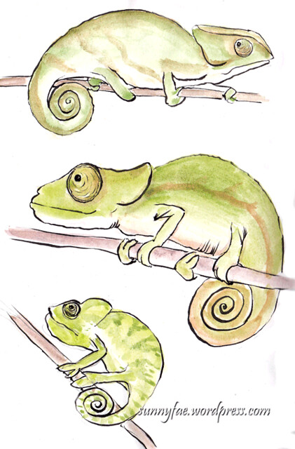 chameleon sketches