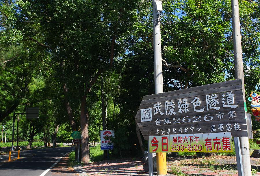 台東景點鹿野武陵綠色隧道A07