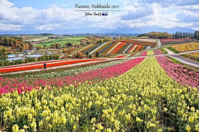 Hokkaido Furano