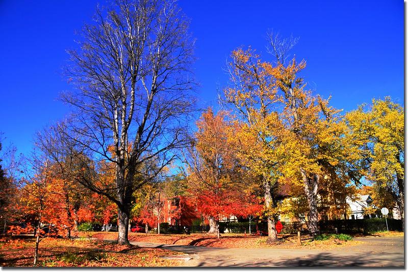 2017 Maple in Fall, Boulder, Colorado  (51)
