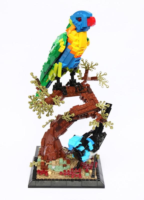 Rainbow lorikeet and Superb wren - 1