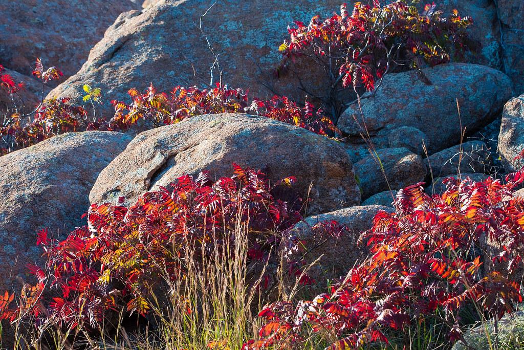 Hotels Near Wichita Mountains Wildlife Refuge