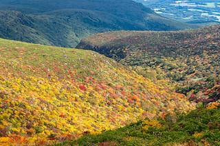 安達太良山山腹の紅葉(クローズアップ)