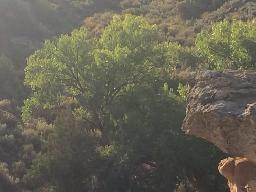 Little ruin canyon