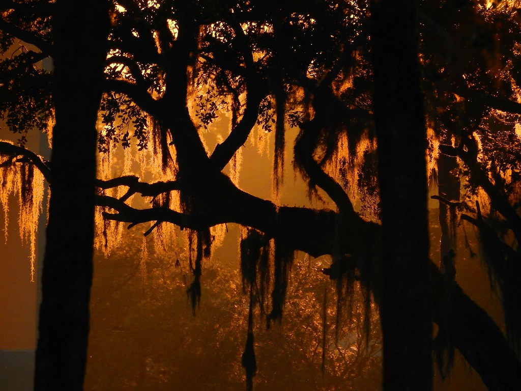 Live Oak Sunrise