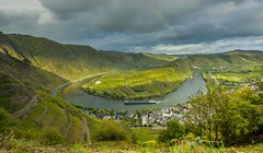 Calmont Moselle loop Landscape  and the village Bremm Germany