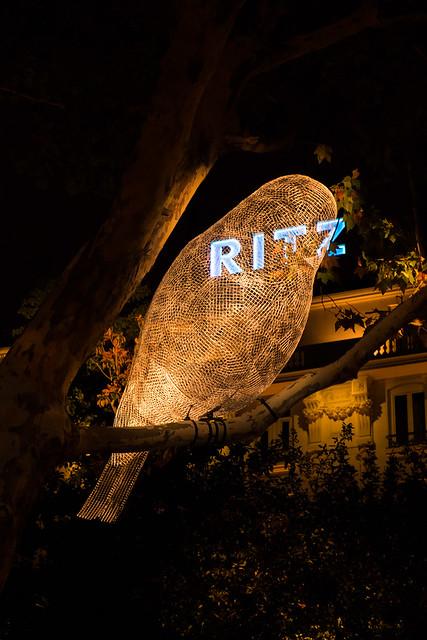 Pájaro luminoso + Ritz
