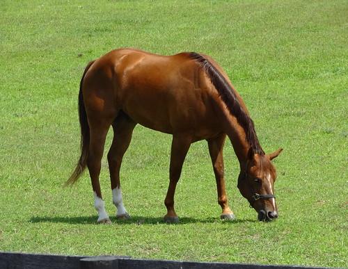 pony 186 (1)