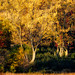 Fall Colors_41175-.jpg