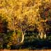 Fall Colors_41175-.jpg