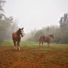 #babyhorse #beautiful #farm #gallop #grass #horse #horse_of_instagram #horses #horseshoe #horseshow #horsesofinstagram #horsestagram #igers #ilovemyhorse #instagood #instahorses #instashot #mane #nature #photooftheday #picoftheday #ponies #pony  #pretty #