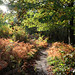 3 Beautiful autumn afternoon at East Blean KWT nature reserve