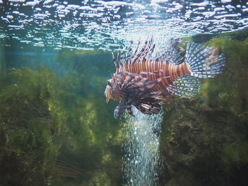 rodoksen-kaupunki-akvaario-museo