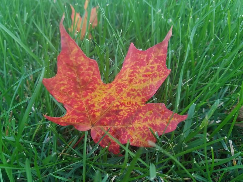 Random leaf.