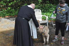 Blessing a puppy