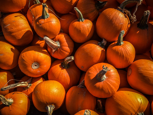 Schuh Farms and Pumpkins-004