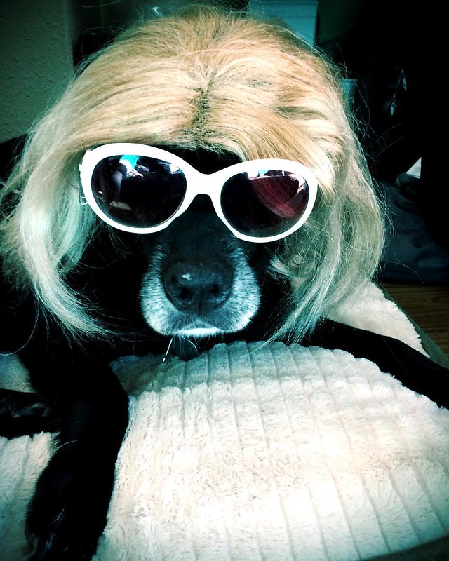 "Day 16: the Kurt Cobain wig! Maggie dog quotes: ""The worst crime is faking it."""