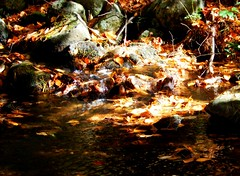 Autumn Gold 10/20/17