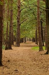 Pathway to Woking
