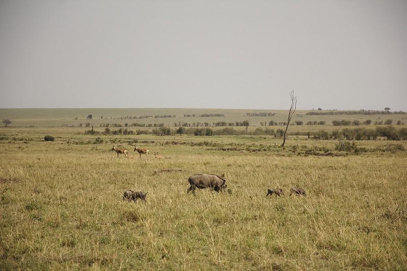 Maasai Mara 2 42