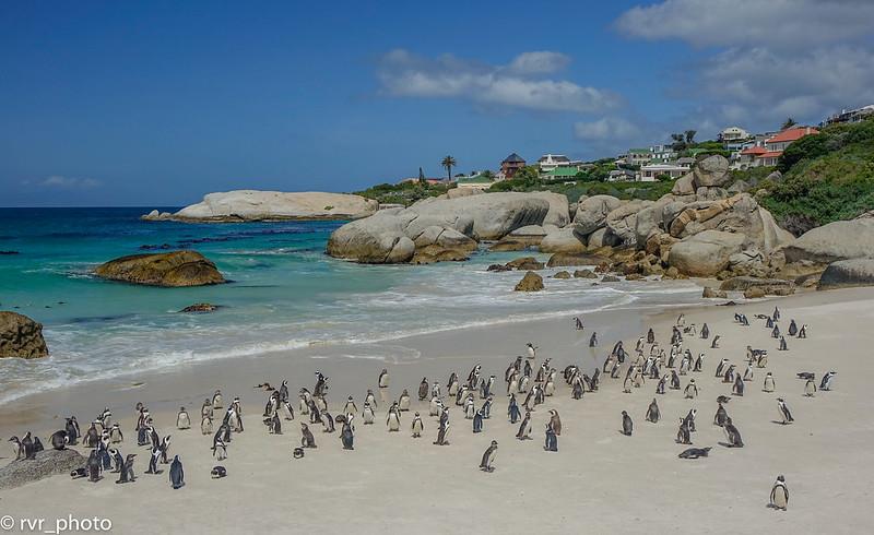 Boulders Penguin Colony en Simon's Town, Sudáfrica