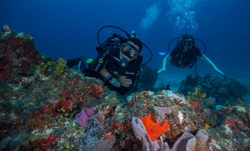 diving (37 de 77)