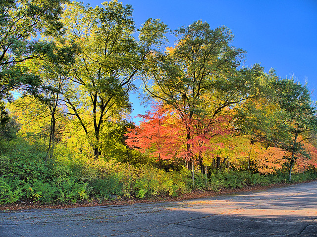 Lippold Park color 2-20171009
