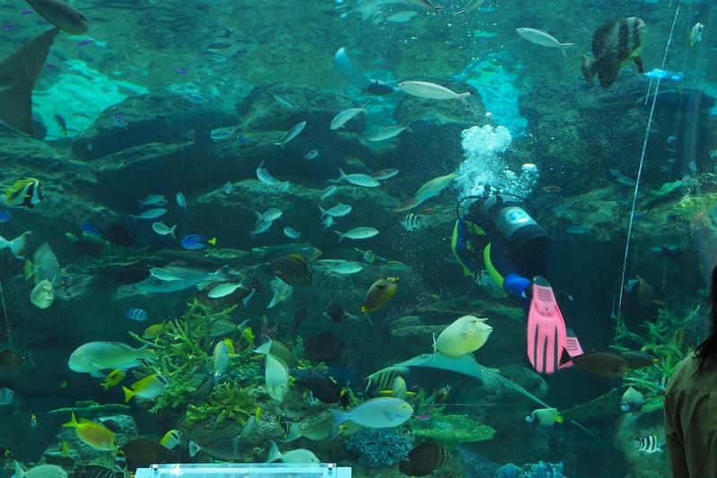 名古屋港水族館ダイバーコミュニケーション