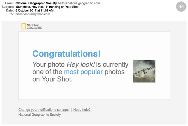 Your photo Hey look is trending on Your Shot